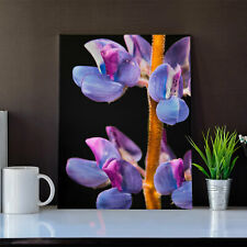 Purple Orchid Flower 20x30 Inch San Jose California Stretched Canvas Print