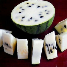 FD807 Rare Sweet Watermelon Seeds Fruit Garden Seed ~White~ 10PCs Free Shipping✿