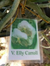 Orchid Vanda Elly Carol Two Tone Exotic Tropical Plant