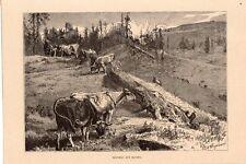 TROUPEAU DE VACHES AUX MAYENS COW SCHWEIZ SUISSE IMAGE 1912 OLD PRINT