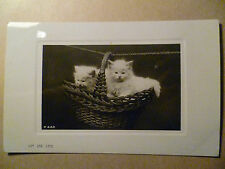 1900s ANIMAL POSTCARD- ON THE LINE TWO CATS (Rotary Photo, London)