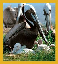 Gift Trenz Pelican and Chicks Magnetic Bookmark