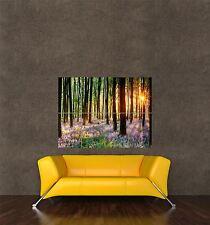 Cartel impresión Foto Paisaje Bosque Madera árboles Flores Sol Sunshine pamp165
