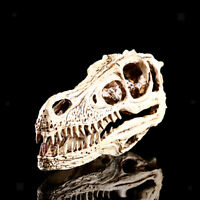 Resin Replica Raptor Dinosaur Skull Head Bone Fossil Home Bar Decor Fei34