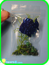 """BRAZIL My Pet Piranha-in-a-Bag  """"Girl Scout"""" or """"Boy Scout"""" SWAPS  Craft Kit"""