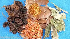 Garnelenfutter: Karotten Blütenpollen Eichenblätter Echinacea Erlenzapfen