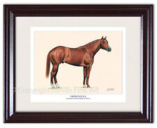 New listing Impressive - Framed American Quarter Horse Art signed equine artist Rohde