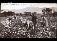 Environs de NICE (06) CUEILLETTE des ROSES trés animée , période 1930