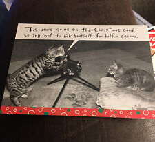 3 Shoebox Greetings Christmas Holiday Card Tiger Cat Cats Funny Camera Photo Fun