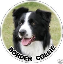 2 Border Collie Car Stickers By Starprint