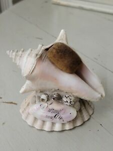 Antique Victorian Sailors Valentine/ Souviner Shell Art