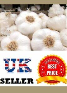 """Garlic Cloves """"Solent Wight"""" From Bulbs - Viable Cloves- UK SELLER"""
