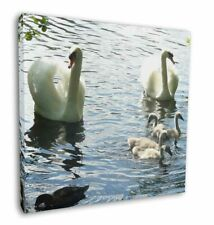 More details for swans and ducks 12