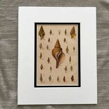 Multi-Colour Traditional Nautical Art Prints