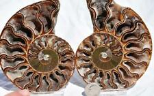"2722 Cut Split Pair Ammonite Deep Crystal Cavity 110myo Fossil 108mm Xl 4.2"""