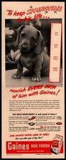 1949 Gaines Dog Meal - Cute Puppy Wiener Dog- Chew Toy- Vintage Ad