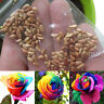 100 Seeds Rare Holland Rainbow Rose Flowers Lover Potted Plants Home Garden