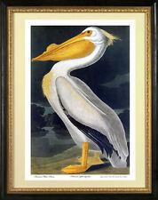 Audubon White Pelican 30x44 Hand Numbered Edition Fine Art