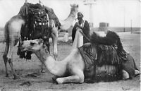 POSTCARD   EGYPT  ETHNIC   Bedouins  and  Camels