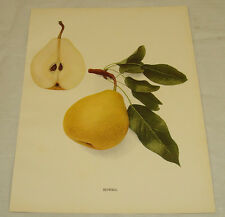 1921 Antique Print/HOWELL/From Pears of New York, by Hedrick