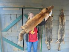"52""# 401 Monster Adirondack Mt. Super Cherry Red Fox Pelt/Coyote/Fur/Fox/Craft"
