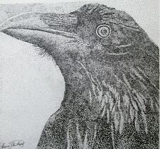 RAVEN - US, small, art reproduction, artist, ink, realism, birds
