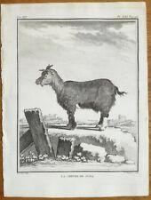BUFFON: Early 4to Print Goat Chevre de Juda  - 1782#