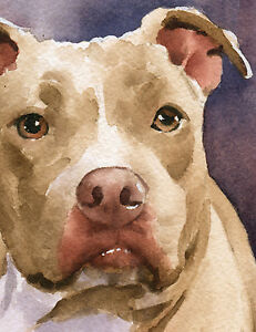 """""""STAFFORDSHIRE TERRIER"""" Watercolor Dog ART Print Signed by Artist DJR"""