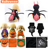 Halloween Spider Skull Pumpkin For Small Dog Cat Cosplay Pet Clothes Costume