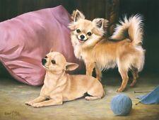 Chihuahua limited edition dog print by Robert J.May