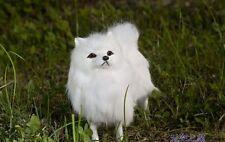 cute simulaiton white dog toy polyethylene&furs Pomeranian model about 20x18x6cm