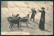Aosta Piccolo San Bernardo Cane cartolina QQ5925