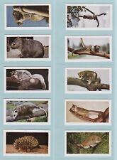 Trade Cards - Wild Animals (Horniman) - Complete Set