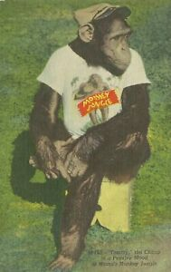 Miami Florida Monkey Jungle Roadside Attraction Tommy the Chimp Linen Postcard