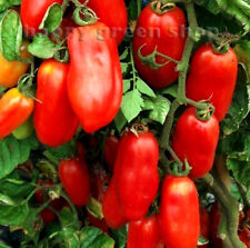 FREE UK P&P - VEGETABLE SEEDS - TOMATO SAN MARZANO 2 - 40 SEEDS