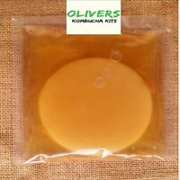 Organic Kombucha Scoby, 200ml Strong Starter Tea, Instructions, Free Delivery !!