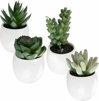 Set of 4 Mini Faux Succulent Plants in Magnetic-Mount White Ceramic Planters