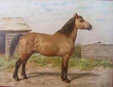ANTIQUE PRINT-Lithograph- CANADIAN HORSE- Eerelman-1898