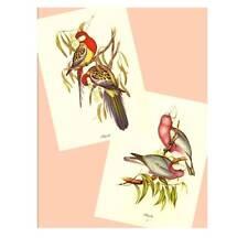 Pairs of Australian Birds, 2 Vintage Prints by J.Gould