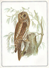 VINTAGE BIRD PRINT ~ URAL OWL ~ JOSEF WOLF