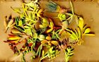 Assorted Succulent Cuttings in 10 Varieties