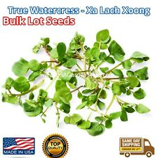 20,000+True Watercress Seeds Garden Microgreen 물냉이 xīyáng cài xà lách xoong LOT