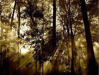 NATURE LANDSCAPE PHOTO SUN BEAM TREE FOREST COOL POSTER ART PRINT BB1471B