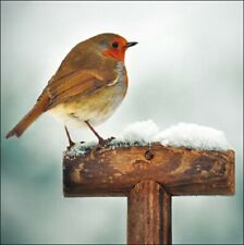 Pack of 5 Winter Robin In Snow Childline Charity Christmas Cards