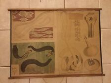 Original vintage zoological pull down school chart of Tapeworm litograph