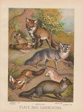 FOXES FOX & PUPS SILVER FOX BLUE FOX ARCTIC FOX FENNEC FOX ANTIQUE LITHOGRAPH