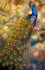 Hand Painted animals Oil Painting Canvas Wall Decor beautiful peacock 3 24X36