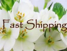 Hadar Designers Express Airmail - Fast Shipping $15