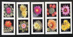 US Stamps ERROR. 2019 Cactus Flowers 5 Sets Pairs Imperforate Between.