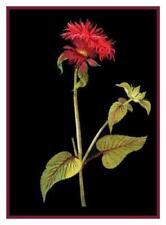 Patrones de punto de cruz color principal rojo, flores